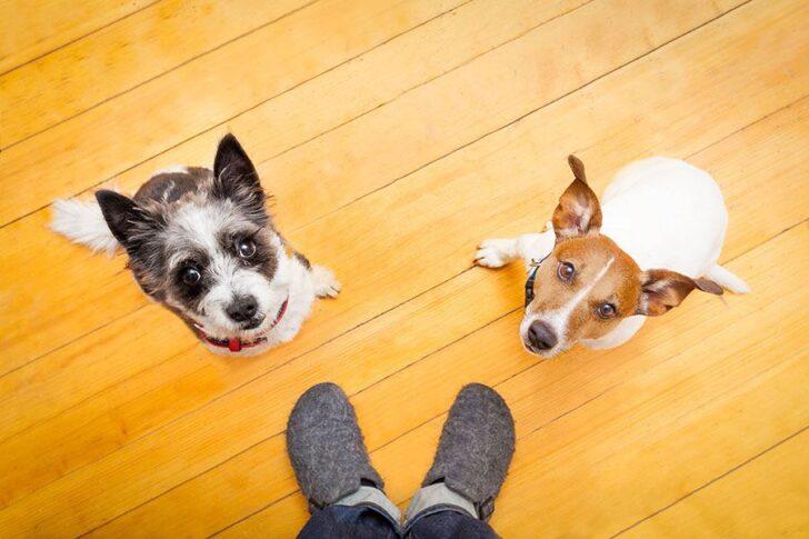 2 honden volgen baasje