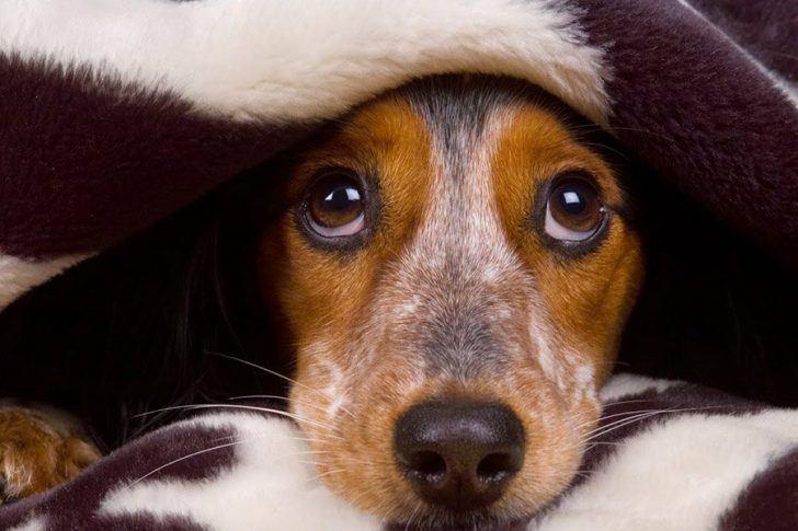 angst bij honden
