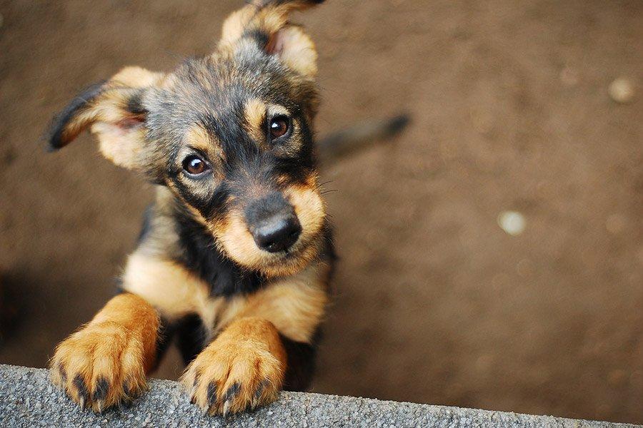 Asielhonden: waarom een hond uit een asiel kiezen?