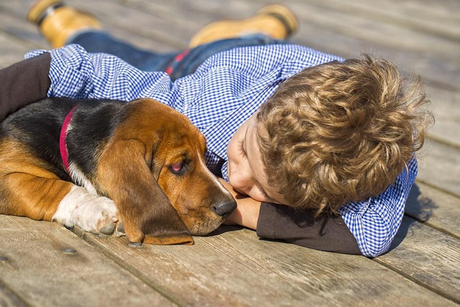 basset hound verzorging