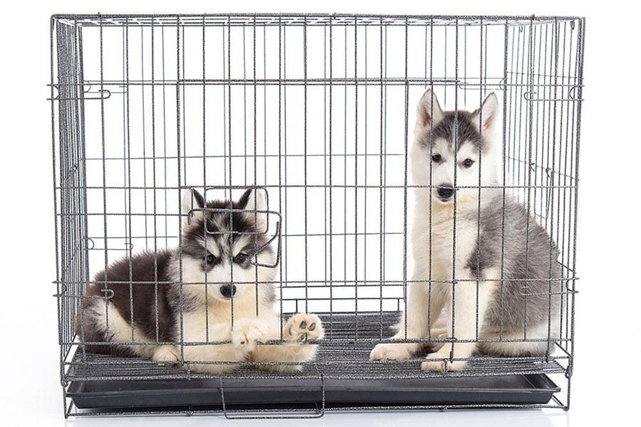 Benchtraining voor je puppy of hond