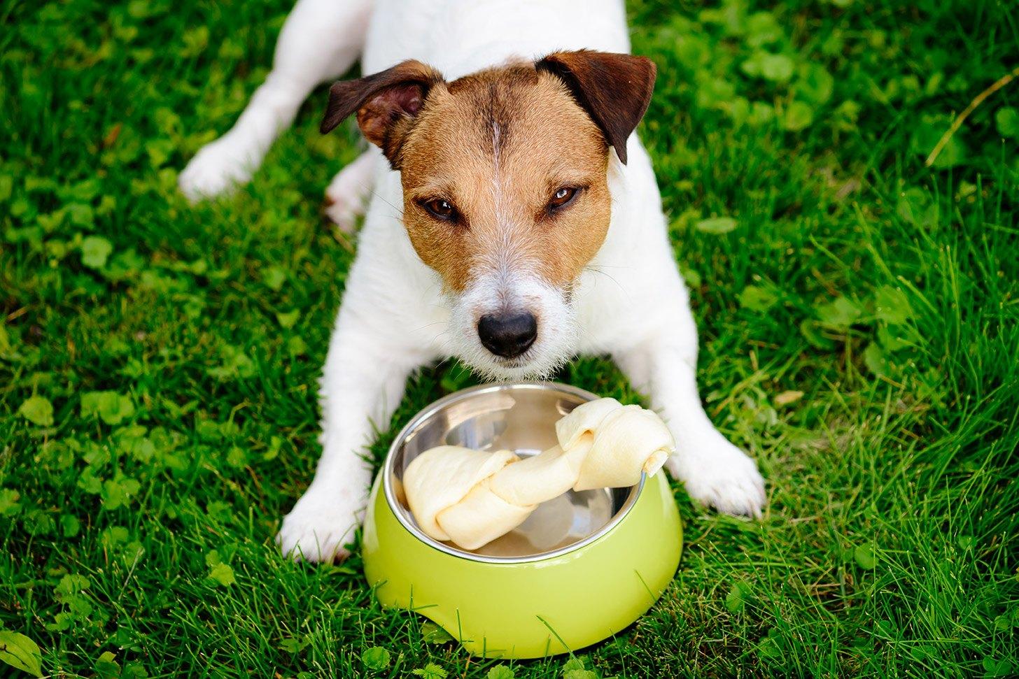 Bezitterigheid bij honden afleren