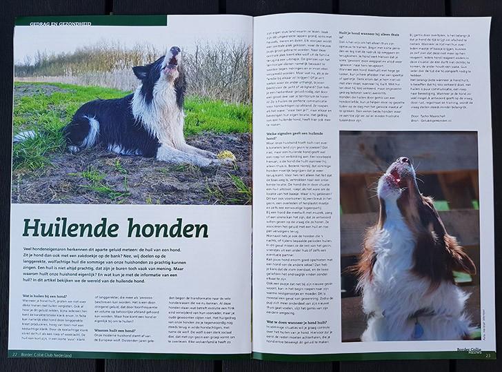 border collie club nederland magazine 2