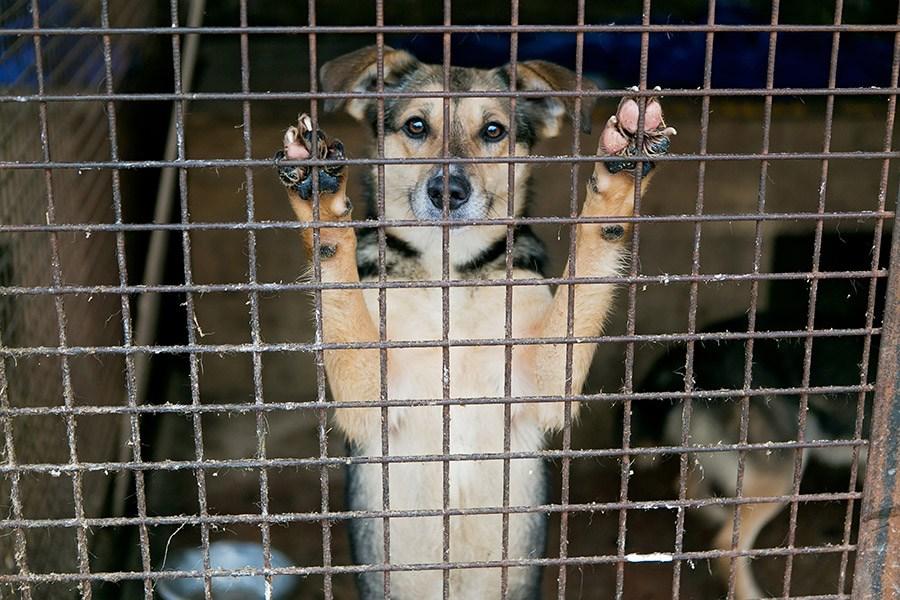 buitenlandse hond adopteren