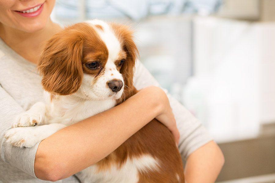 Cavalier King Charles Spaniël Gelukkige Honden