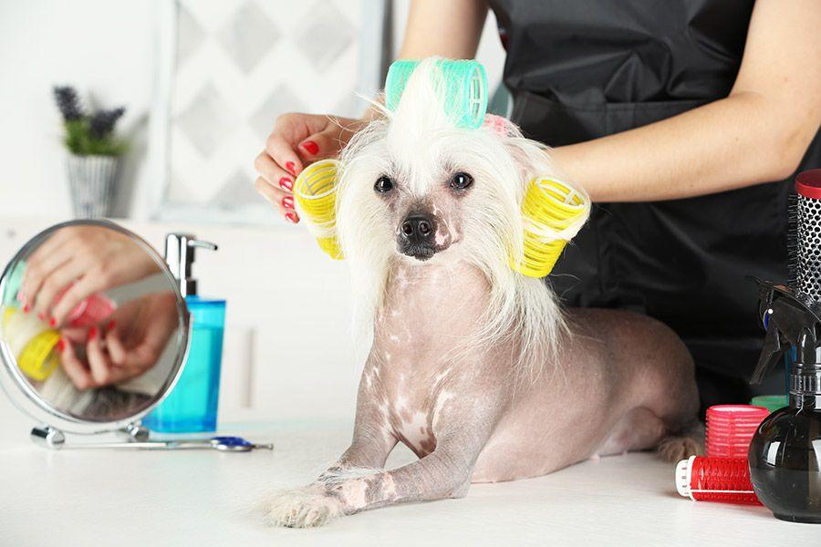 chinese naakthond verzorging