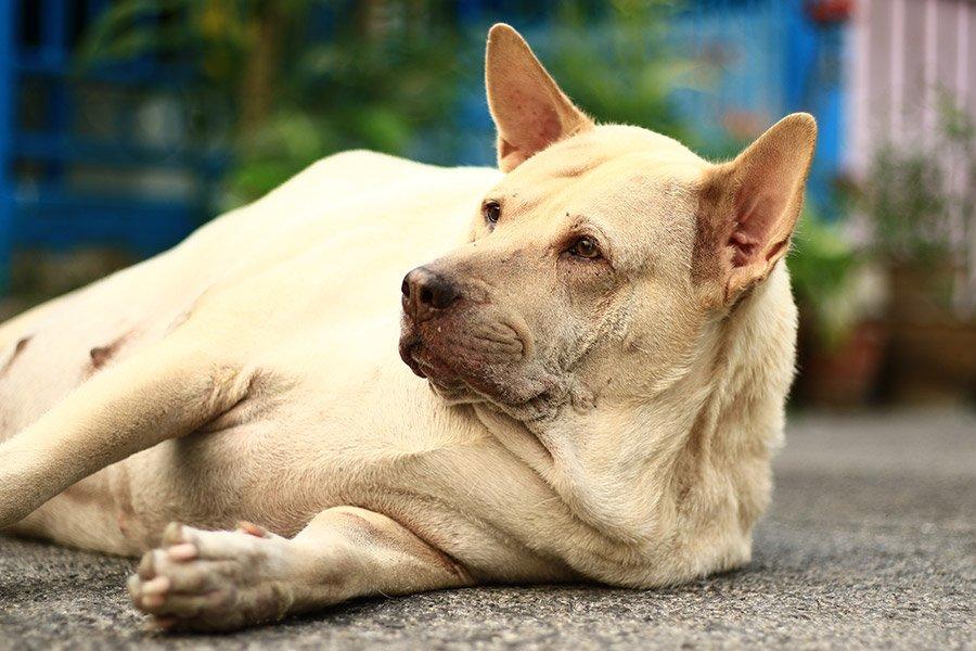 Diabetes bij honden: symptomen & oorzaken