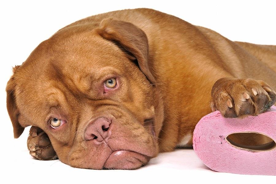 Diarree hond: oorzaken en behandelen