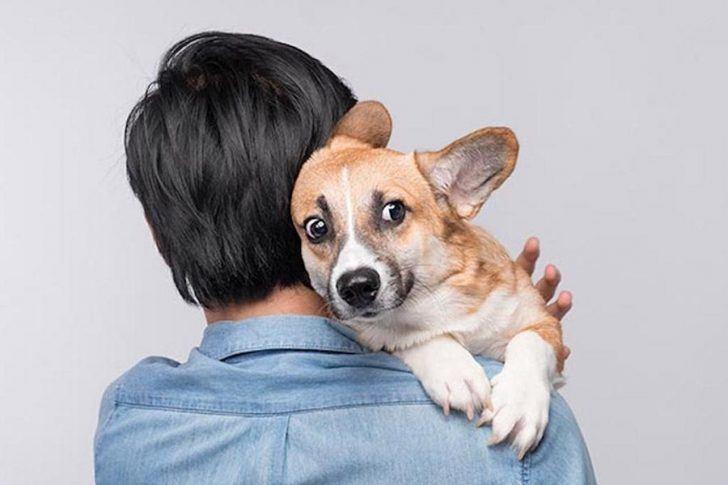 gestresste hond