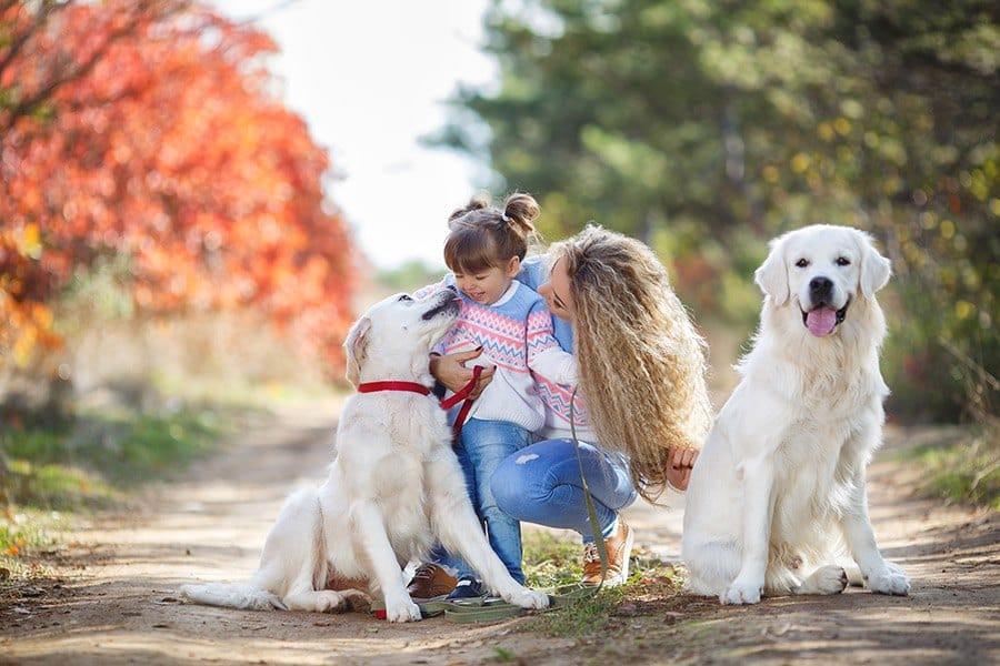 Gezinshonden top 10 (kindvriendelijke honden)