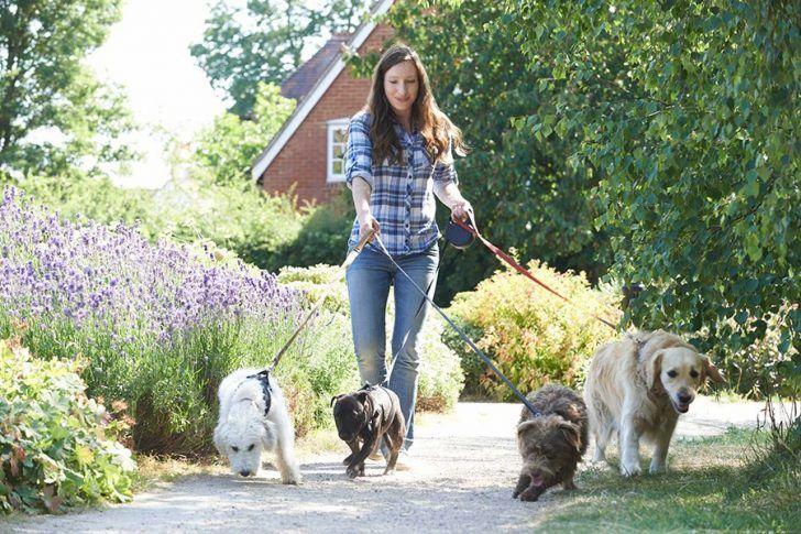goede hondenopvang vinden voor je hond