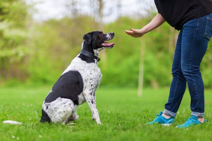 goede hondentraining