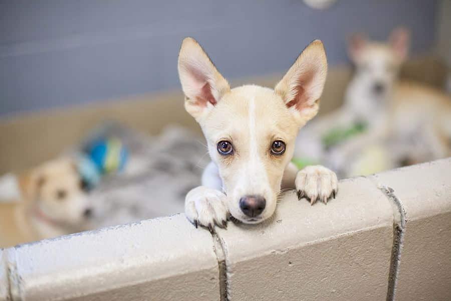 Een hond adopteren – adoptiehond Nederland