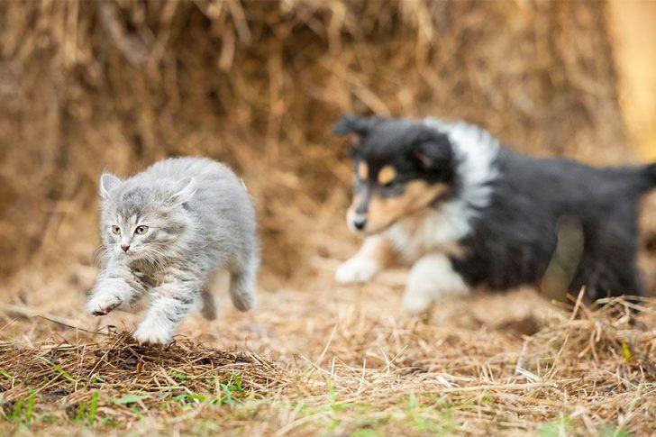hond afleren achter katten aan te rennen