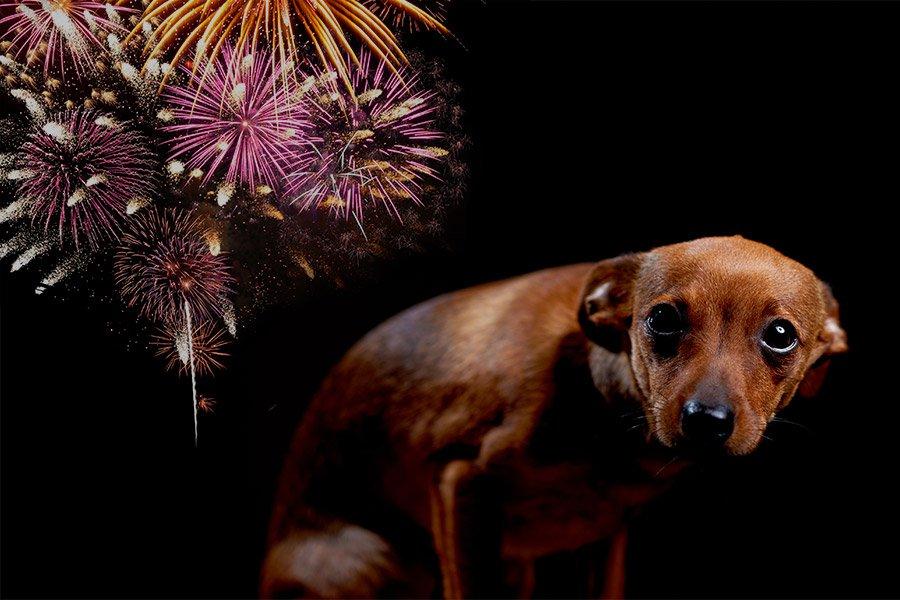 Hond bang voor vuurwerk (vuurwerkangst)