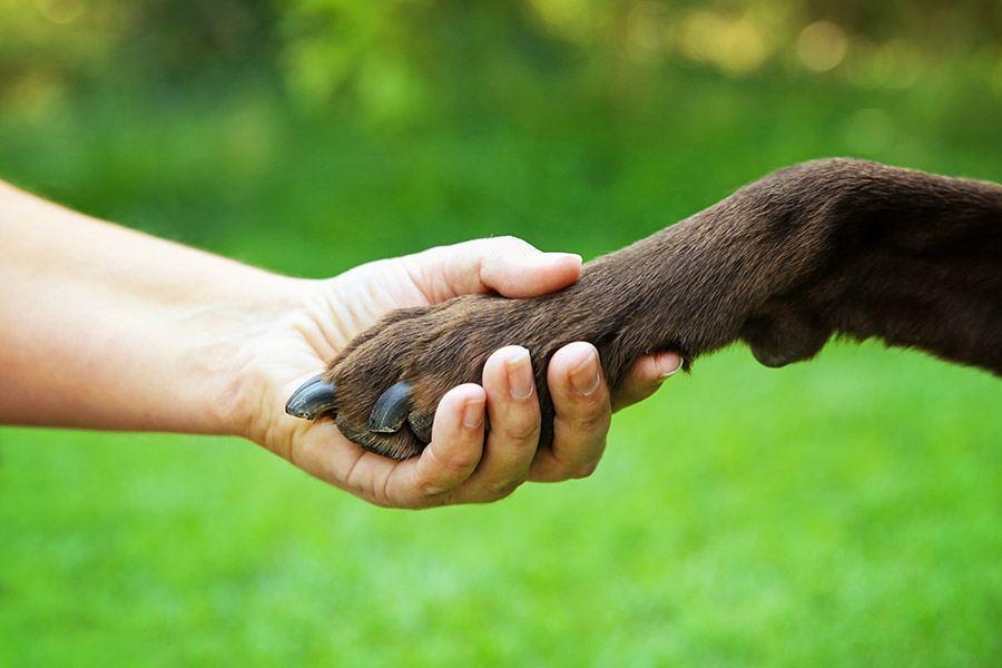 Leer je hond pootje geven