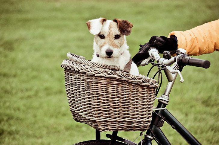 hond in de fietsmand