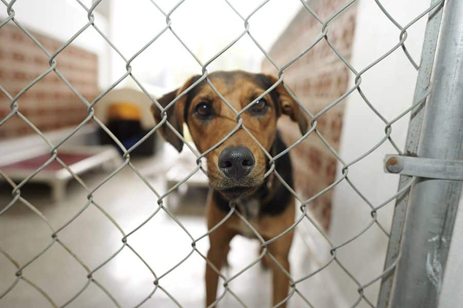 hond in dierenasiel