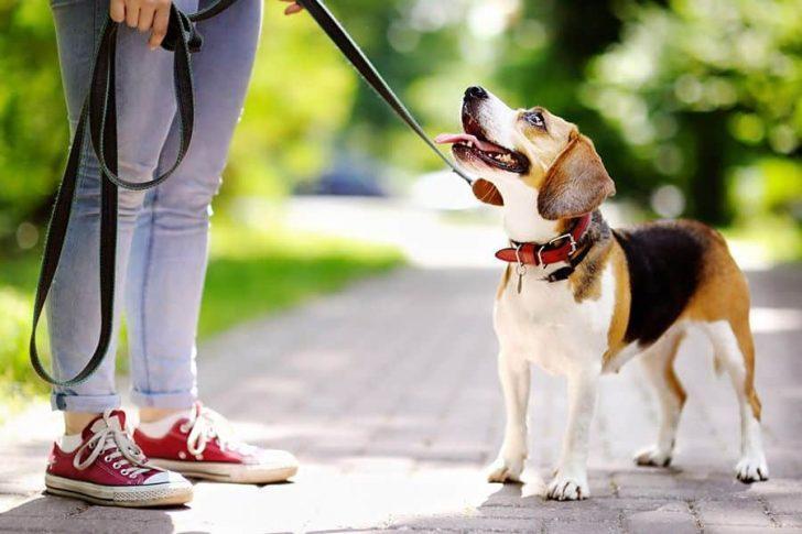 hond leren aan de voet te lopen