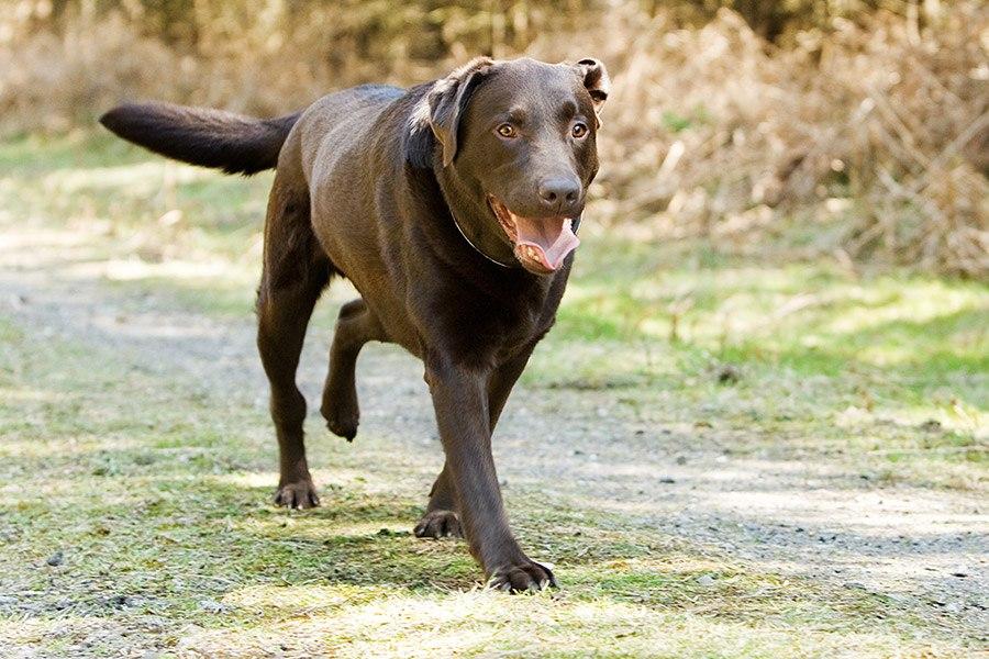 Mijn hond loopt mank