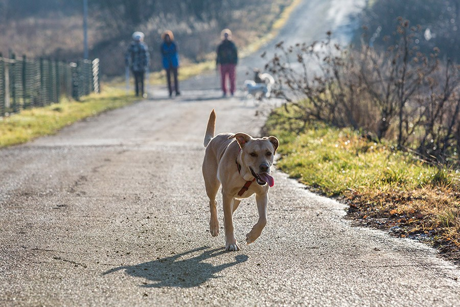 Hond loslopen: hond leren loslopen