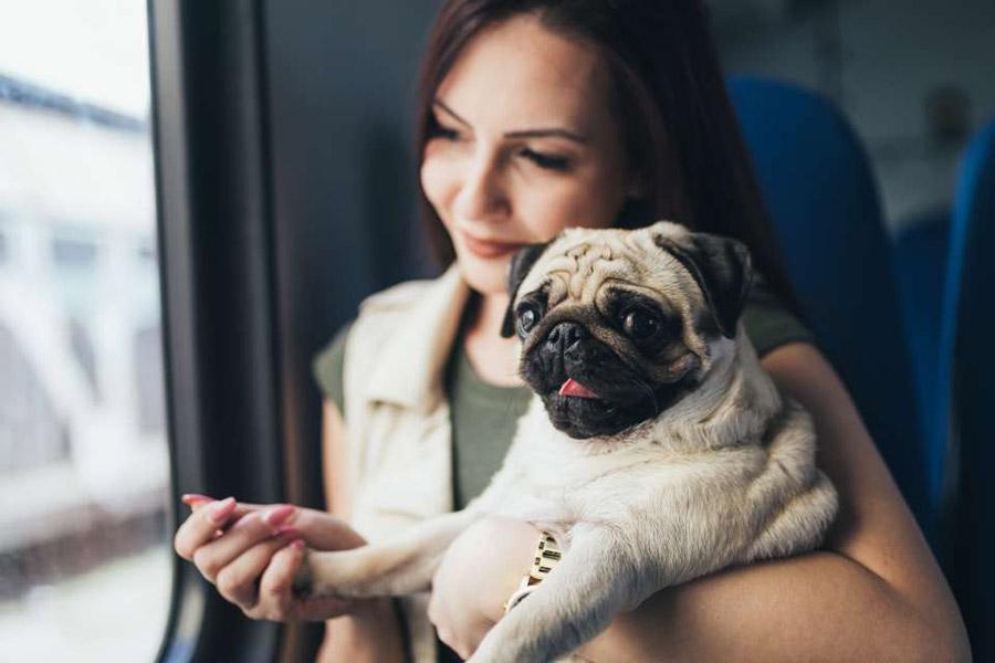 Hond mee in de trein of bus
