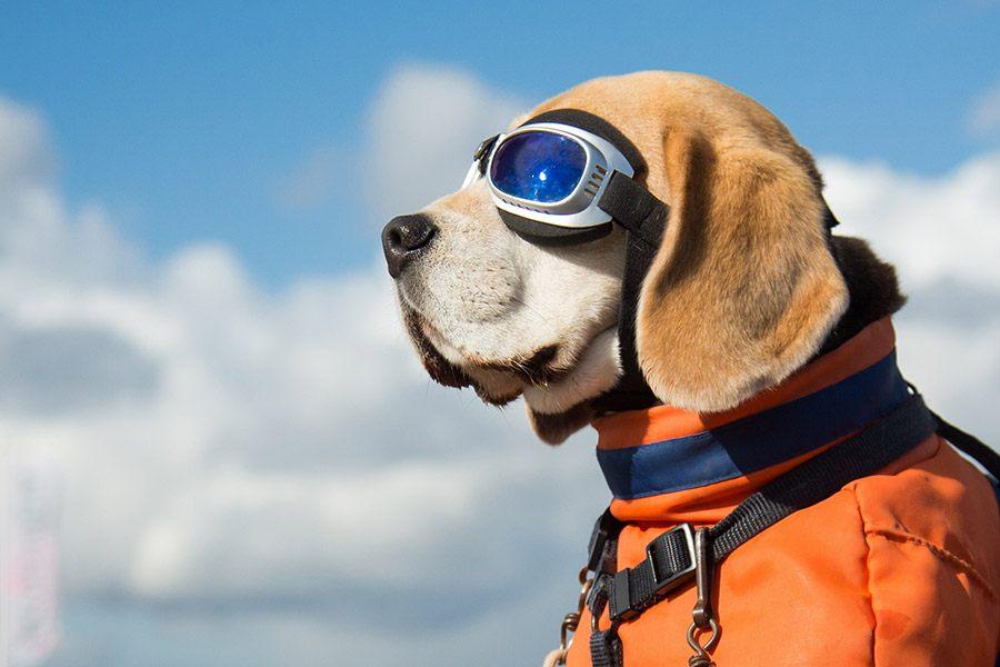 Je hond mee in het vliegtuig