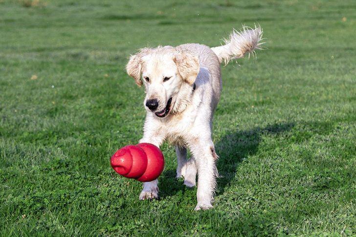 hond met kong hondenspeelgoed