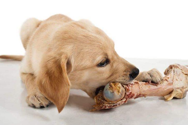 hond met vleesbot