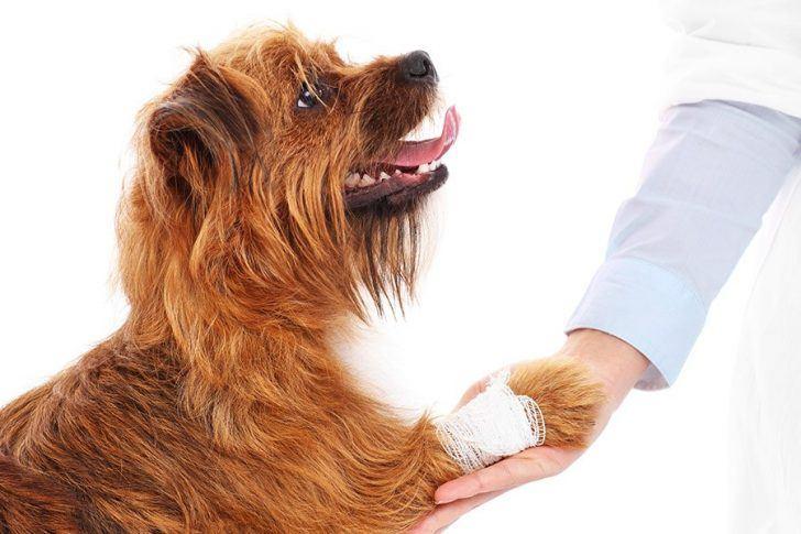 hond met wond en verband