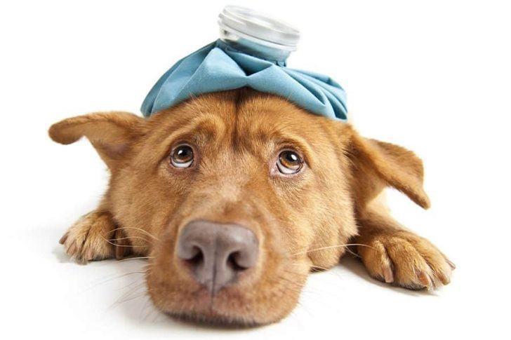 Verrassend Heeft mijn hond pijn? Bekijk de 10 symptomen • Gelukkige Honden FK-76
