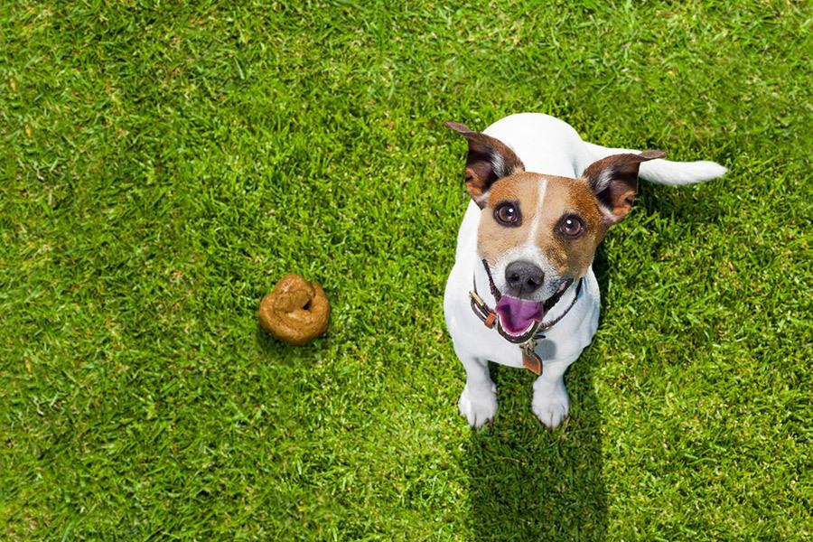 Hond poepen in de tuin afleren