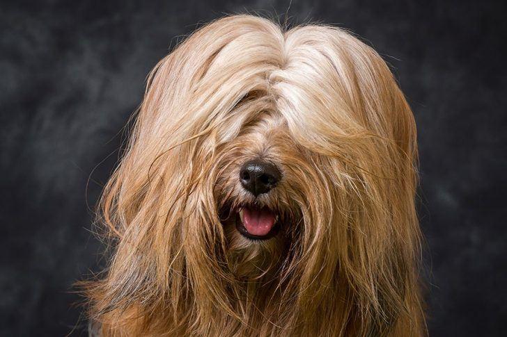 hond te lang haar