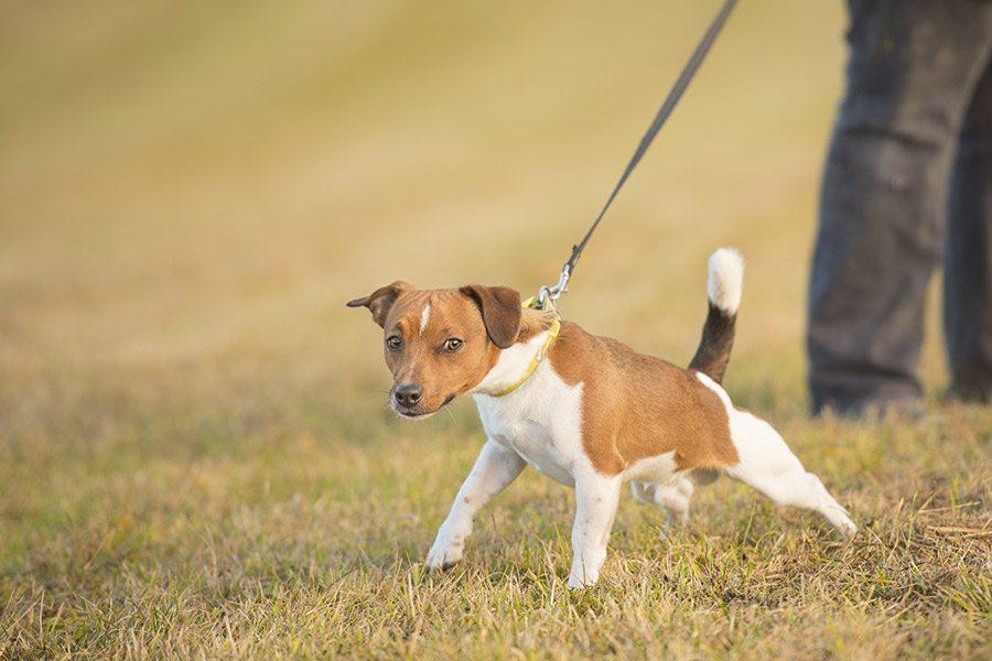 Hond trekt aan de lijn: Hoe kun je dit afleren?