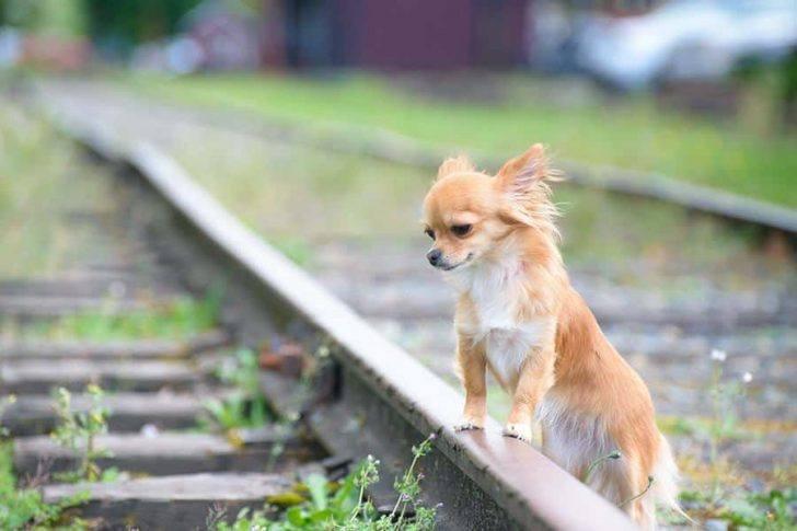 hond vermist