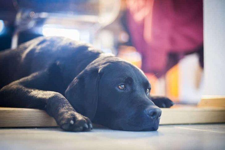 hond verveelt zich