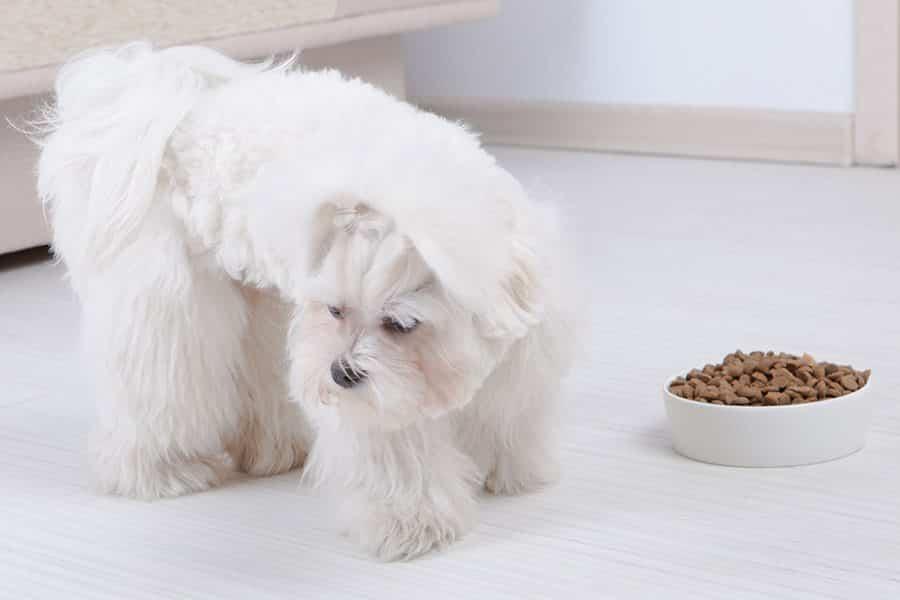 hond eet niet en braakt