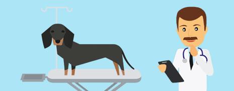 honden gezondheid