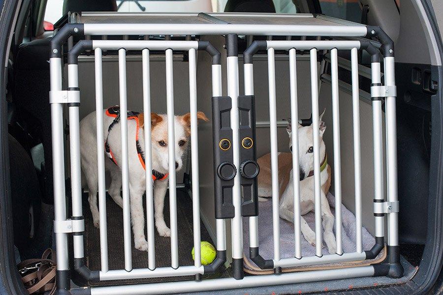 honden in autobench