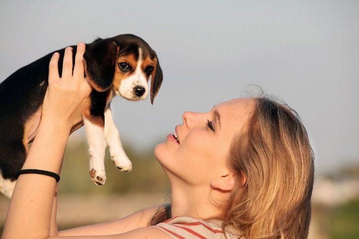 honden te koop nederland