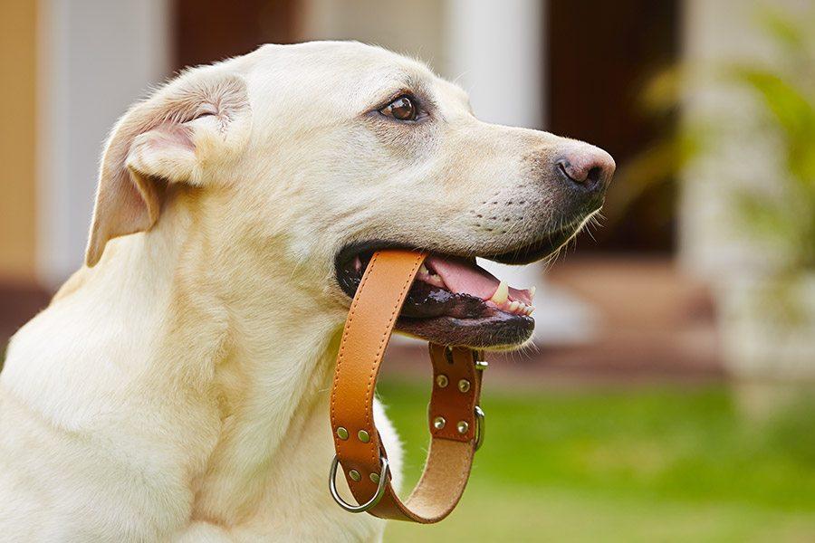 Zo kies je de juiste hondenhalsband