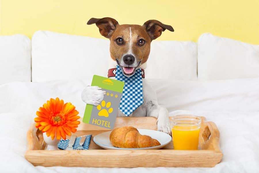 Pet Friendly Hotels Kinder La