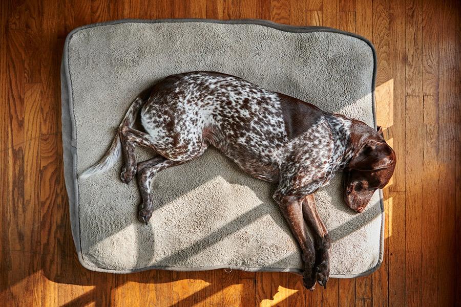 Het beste hondenkussen voor je hond