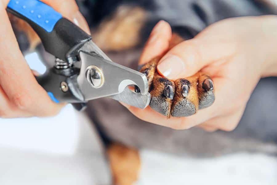 Hondennagels knippen: zelf de nagels van je hond knippen