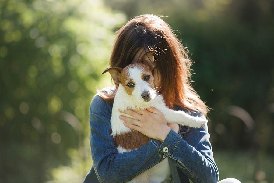 jack russell terrier verzorging