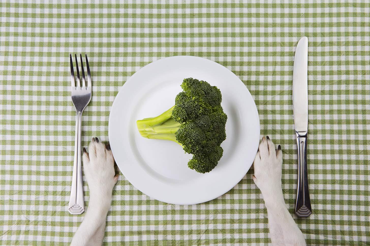 Mag mijn hond broccoli eten?