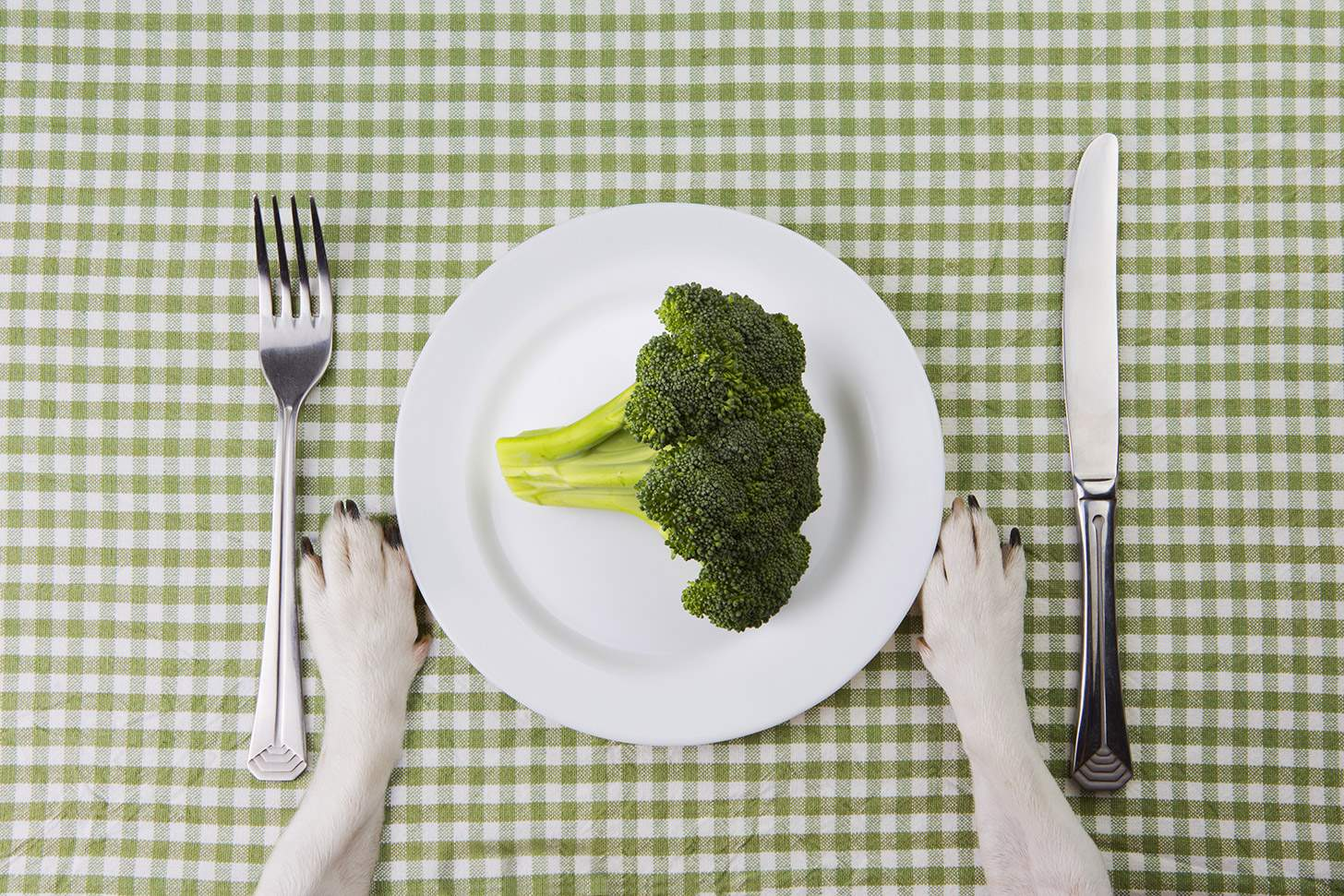 mag hond broccoli eten