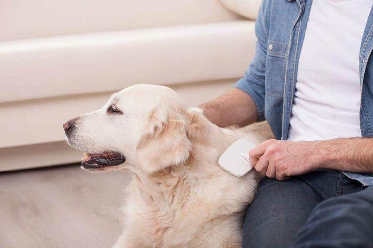 man verzorgt de vacht van een hond