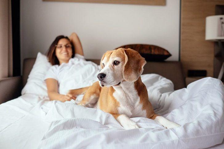 naar een hotel met je hond