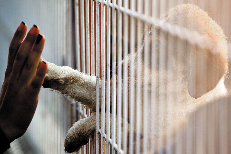 nederlandse hond adopteren